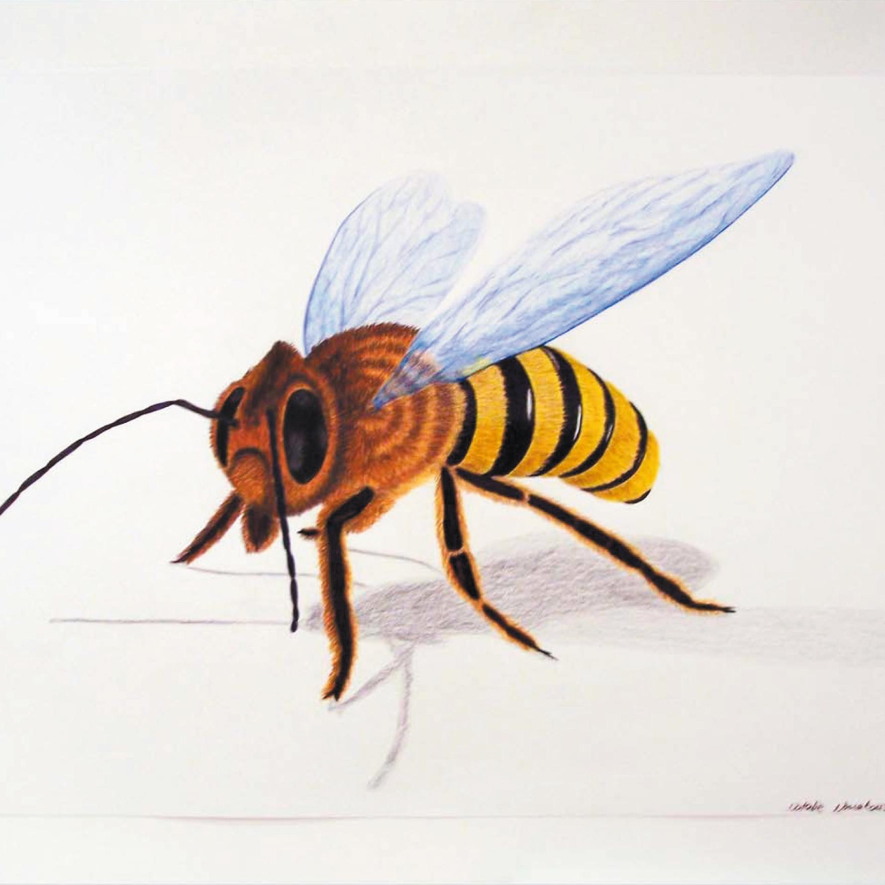 Zeichnung mit Polychromos: Biene