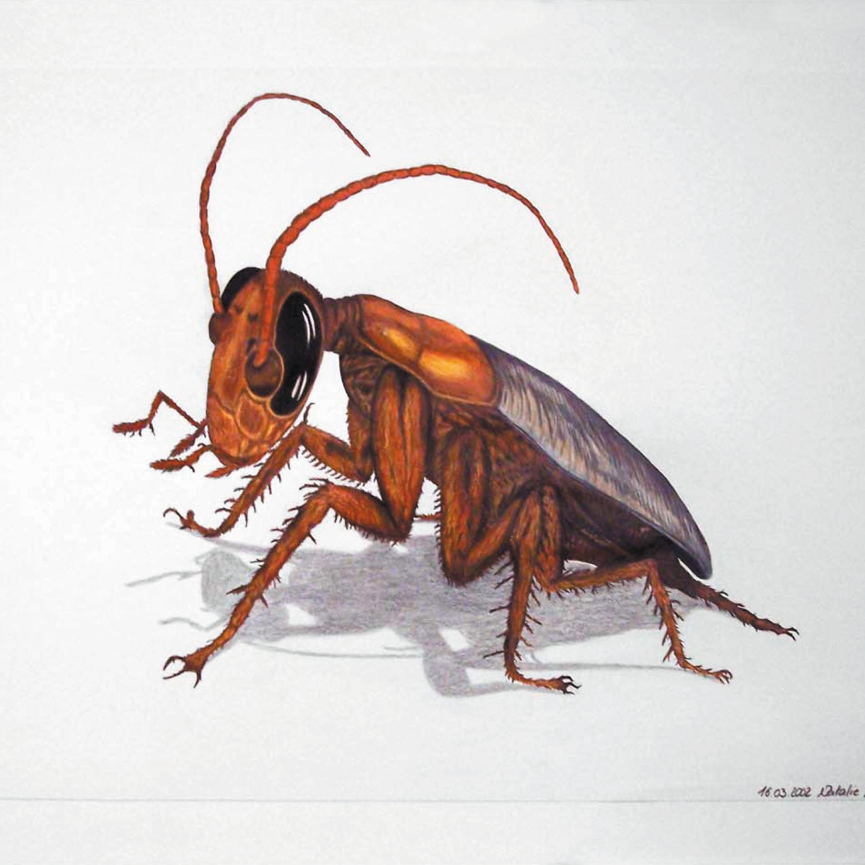 Zeichnung mit Polychromos: Käfer