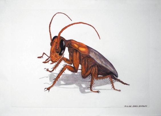 Käfer/Schabe
